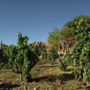 Senderismo y Vino en Priorat
