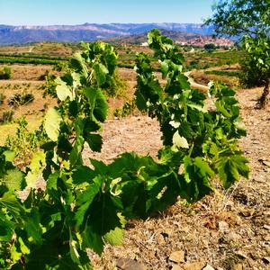 Cata de vinos Priorat